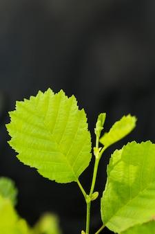 De bladeren van de close-upinstallatie met defocused achtergrond