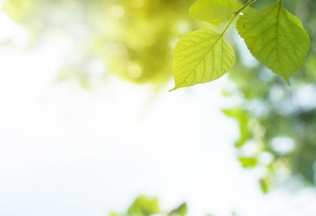 De bladeren van de close-upmening zijn groen met vage achtergrond. cirkelvormige bokeh-natuur en su