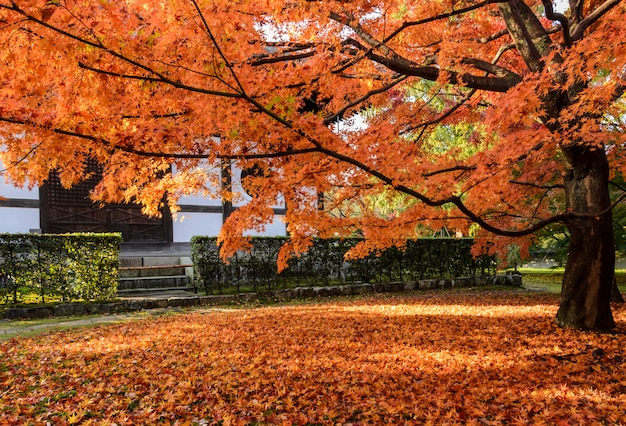 De bladeren van de de herfst rode kleur bij tofukuji-tempel in kyoto, japan