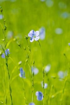 De blauwe close-up van het vlasgebied bij de lente ondiepe diepte van gebied
