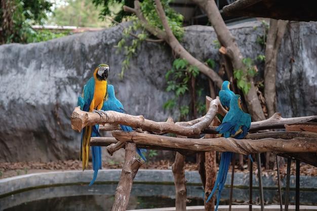 De blauwe en gele ara staan op een stok.
