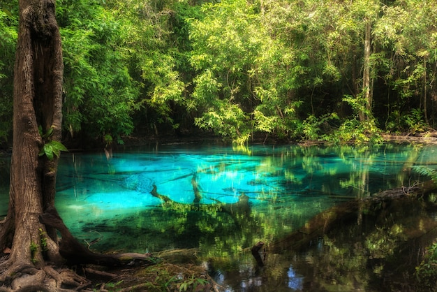 De blauwe pool bij emerald pool is unseen pool in mangrovebos in krabi in thailand.