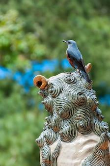De blauwe rotslijstervogel op het hoofd van een shisa-standbeeld met een wazige groene achtergrond