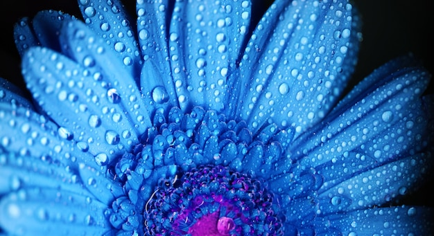 De bloem dichte omhooggaande macrofoto van gerbera