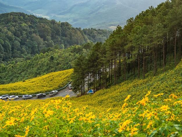 De bloem tung bua tong mexican-zonnebloemgebied van de landschapsaard, mae hong son, thailand