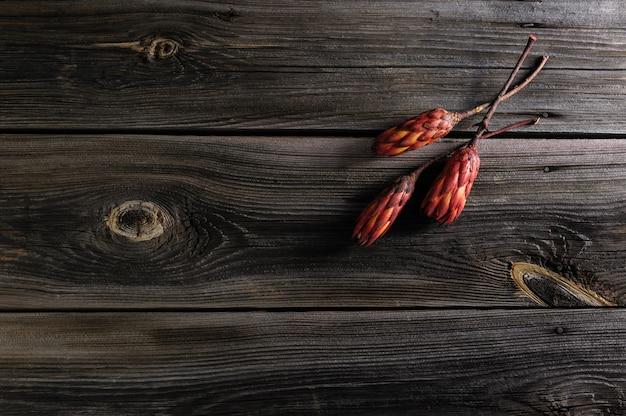 De bloemen van artisjokprotea op oude natuurlijke houten plankachtergrond