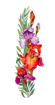 De bloemsamenstelling van irissen die op wit wordt geïsoleerd. aquarel bloemen boeket. oranje iris.