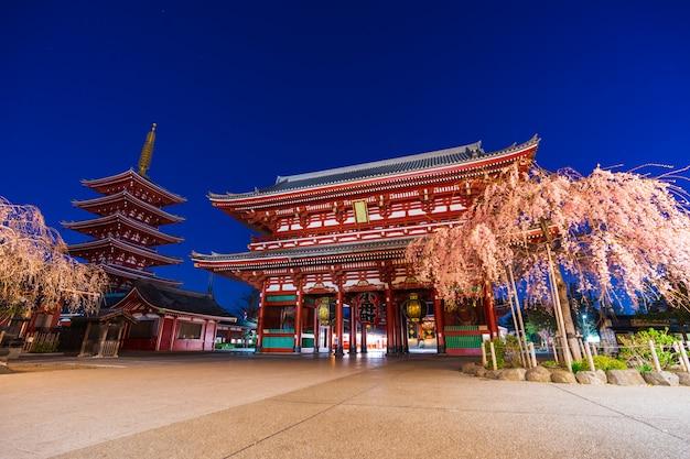 De bloesems van de de lentekers bij sensoji-tempel, tokyo, japan