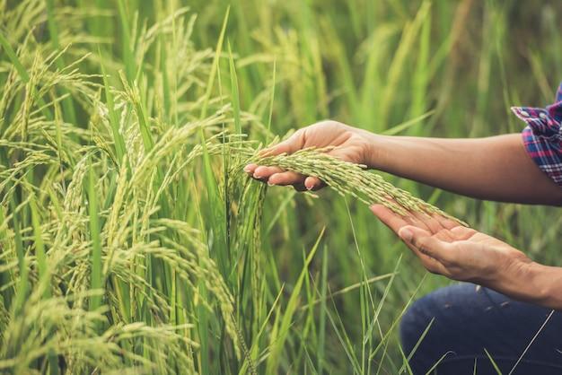 De boer houdt rijst in de hand.