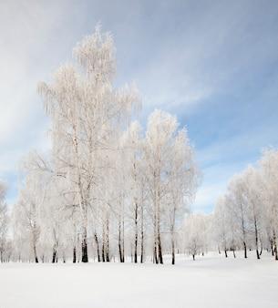 De bomen bedekt met rijp in een winterseizoen.