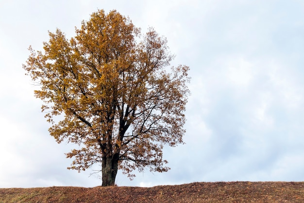 De bomen groeien in het herfstseizoen