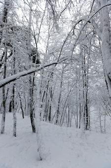 De bomen zijn bedekt met sneeuw na vorst en sneeuwval, sneeuwbanken in het park of winterbos, er zullen voetafdrukken in de sneeuw zijn, een groot aantal kale loofbomen in het winterseizoen