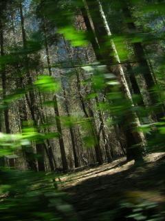 De bomen zijn levende