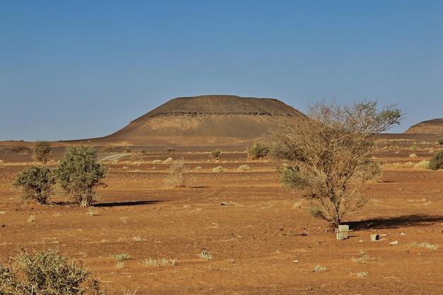 De boom binnen in de soedan-woestijn