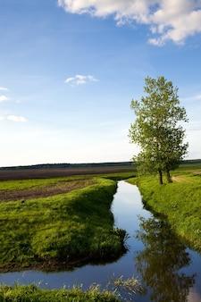 De boom groeit aan de oever van de kleine landelijke rivier