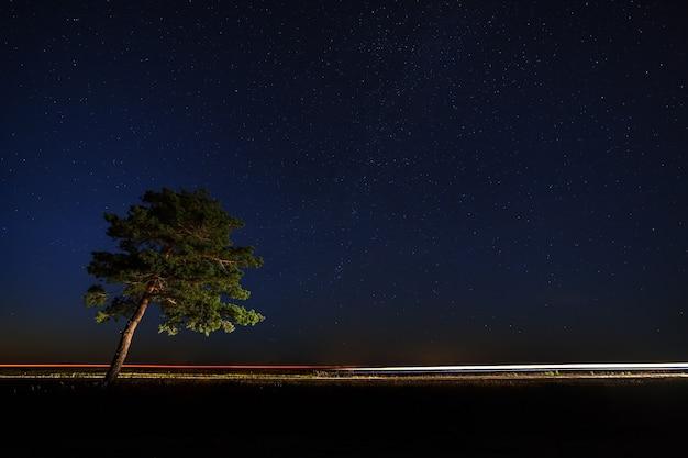 De boom in het licht van autokoplampen op een achtergrond van de sterrenhemel.