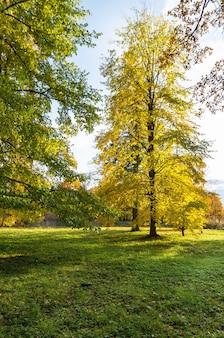 De boom met geel doorbladert in stadspark en zonlicht