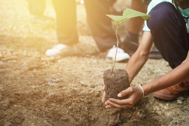 De boom van de handgreep voor het planten in de dag van het wereldmilieu