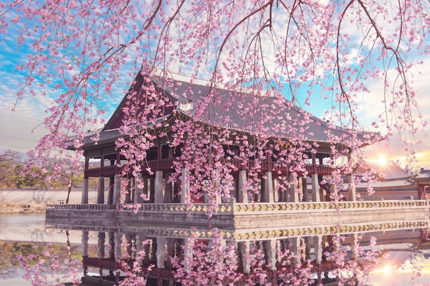 De boom van de kersenbloesem in de lente bij gyeongbokgung-paleis