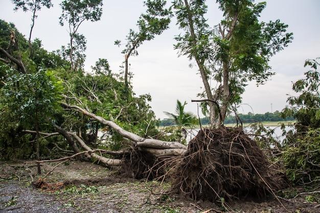 De boom werd vernietigd door de intensiteit van de storm