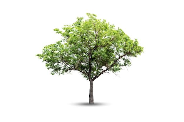 De boom ziet er prachtig uit, geïsoleerd op een witte achtergrond.