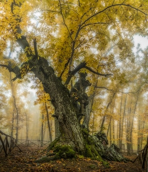 De boom