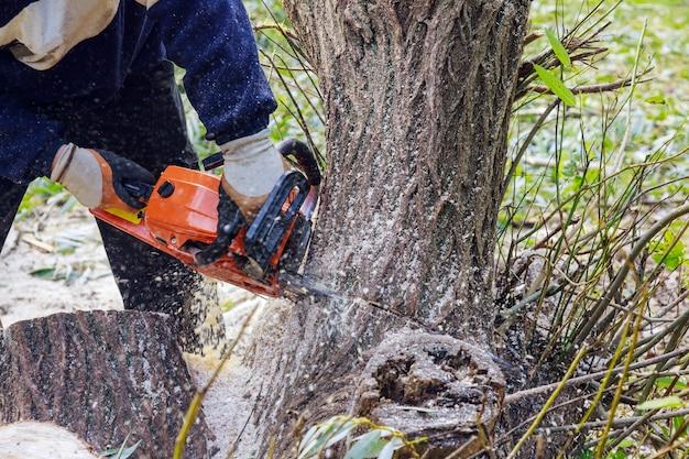 De boomstam gebroken na een orkaan met een werknemer die op de kettingzaag sneed