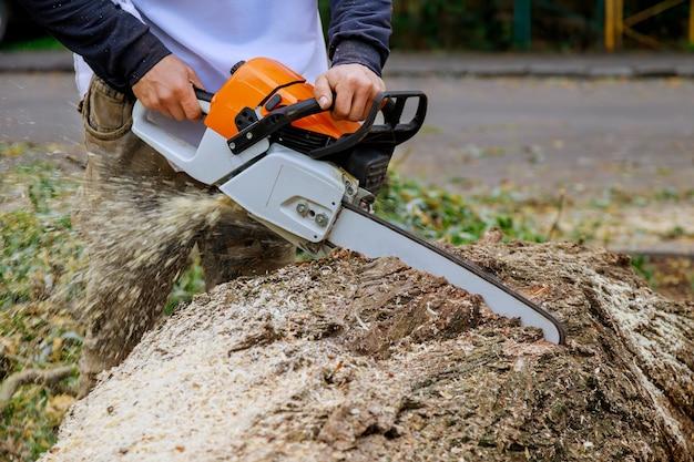 De boomstam gebroken nadat een orkaan van de mens een boom met een kettingzaag omzaagt