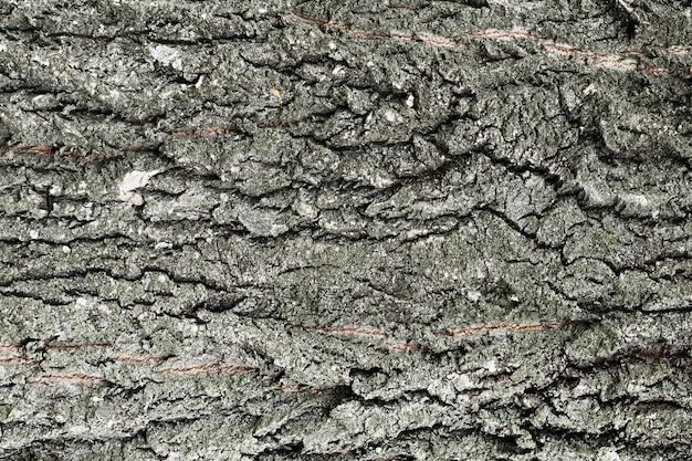 De boomstam houten achtergrond van de boom in grijze schaduwen