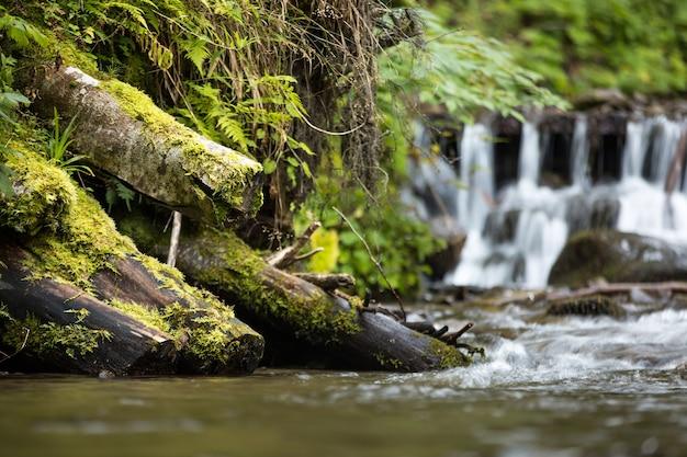 De boomstammen zijn bedekt met mos en een kleine waterval in het bos