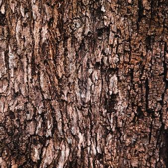 De boomstamtextuur van de boom dicht omhoog