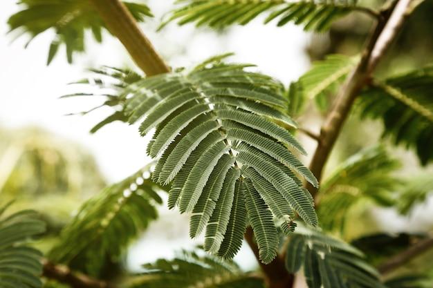 De boomtak en bladeren van de close-up
