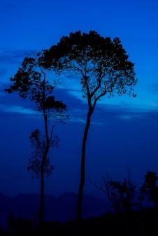 De boomzonsondergang van het silhouet of zonsopgang op berg met blauwe hemel