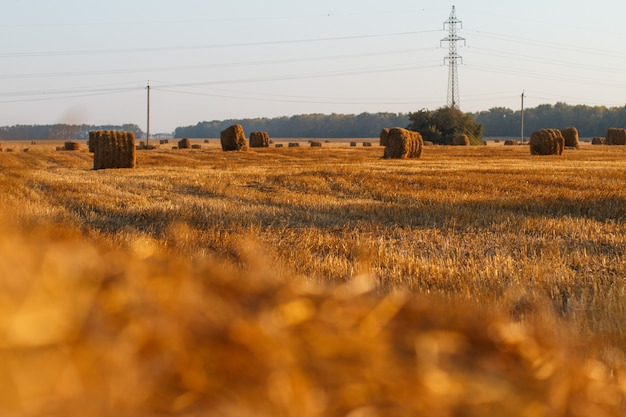 De borgtocht van het hooi oogsten in gouden gebiedslandschap