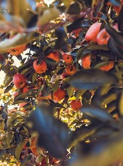 De bos van ovale roze vruchten sluit omhoog