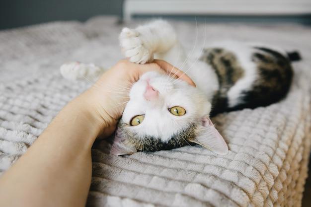 De boze kat bijt de vinger van de vrouw. speelse kat