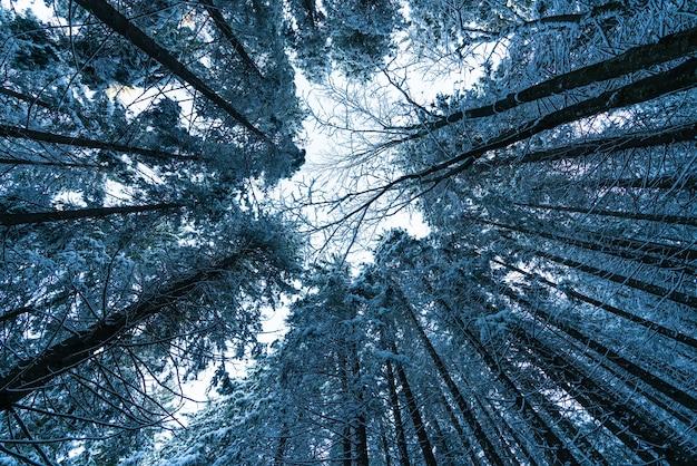 De camera is naar boven gericht richting de kruinen van de bomen, uhd 4k realtime video