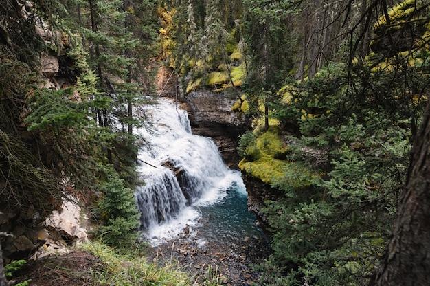 De canionwaterval die van johnston in diep bos bij nationaal park banff stroomt