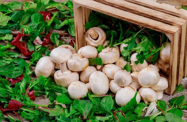 De champignonpaddestoelen, op een verse salade verlaten achtergrond