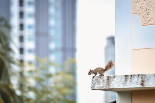 De chipmunks die in de stad wonen, zijn 's ochtends actief.