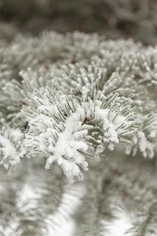 De close-up bevroren bladeren van de pijnboomboom met sneeuw