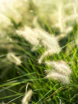 De close-up van gebieds pluizig bloemeninstallaties. natuurlijke achtergrond.