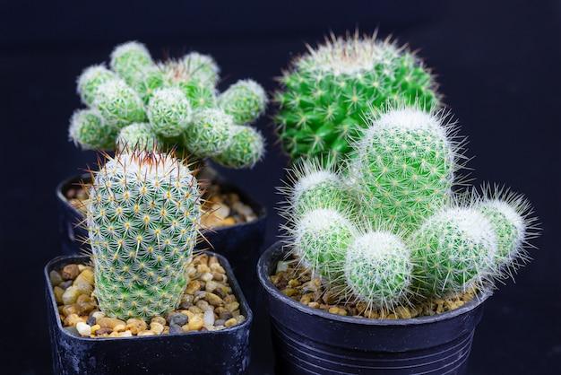 De close-upcactus isoleert op zwarte