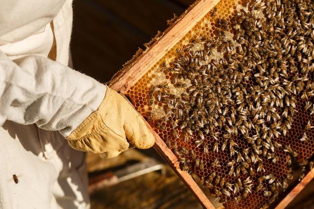 De close-uphanden van imker houden houten kader met honingraat. verzamel honing. bijenteelt.
