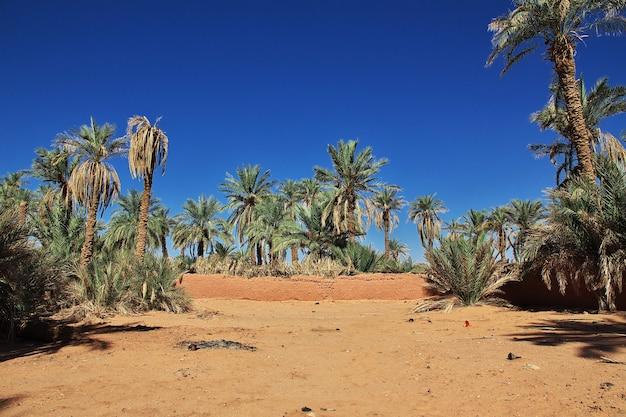 De dadelpalm in de verlaten stad timimun in de sahara-woestijn van algerije