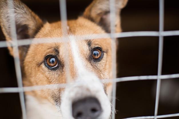 De dakloze hond achter de tralies ziet er met grote droevige ogen uit