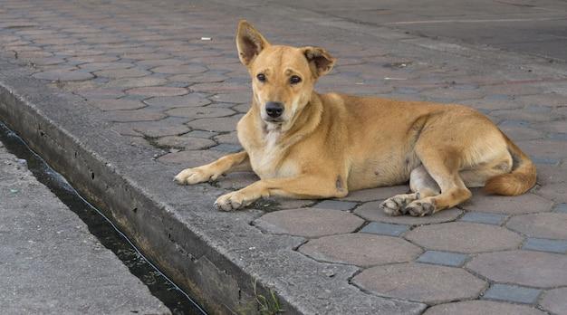 De dakloze verdwaalde hond zit in de straat.
