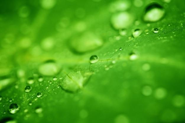 De dalingen van transparant regenwater op groen blad sluiten omhoog. prachtige natuur.
