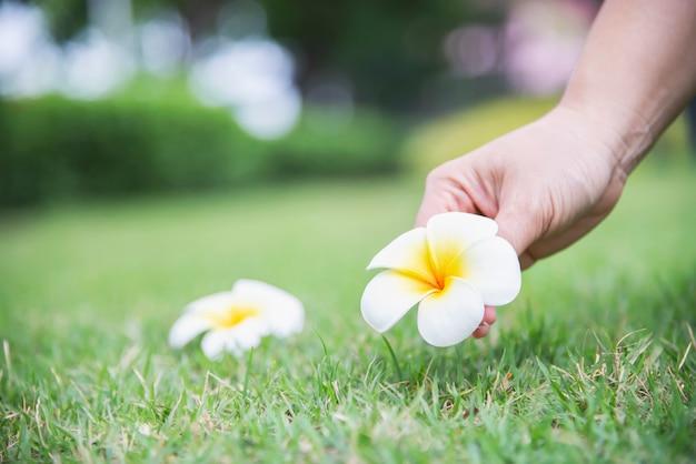 De dame plukt plumeriabloem van groene grasgrond met de hand - mensen met mooi aardconcept