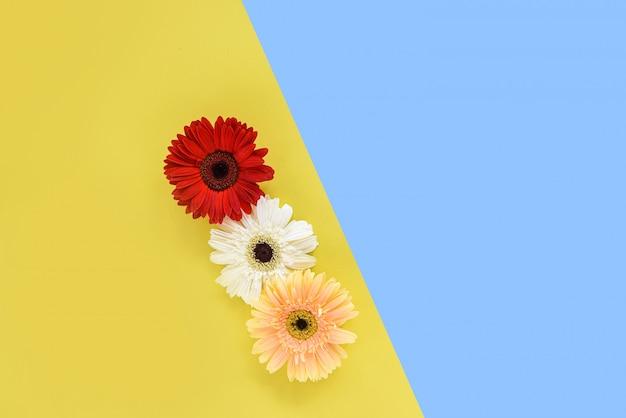 De de lentebloemen van gerbera vers op de samenstelling tropische installatie van het bloemkader